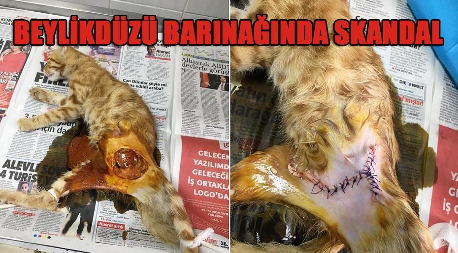 BEYLİKDÜZÜ BARINAĞINDA SKANDAL!