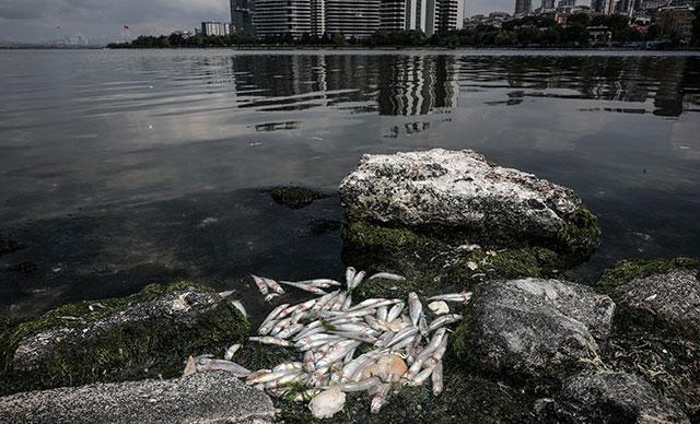 Tarım Bakanlığı'ndan Küçükçekmece Gölü'ndeki 'balık' ölümlerine ilişkin açıklama