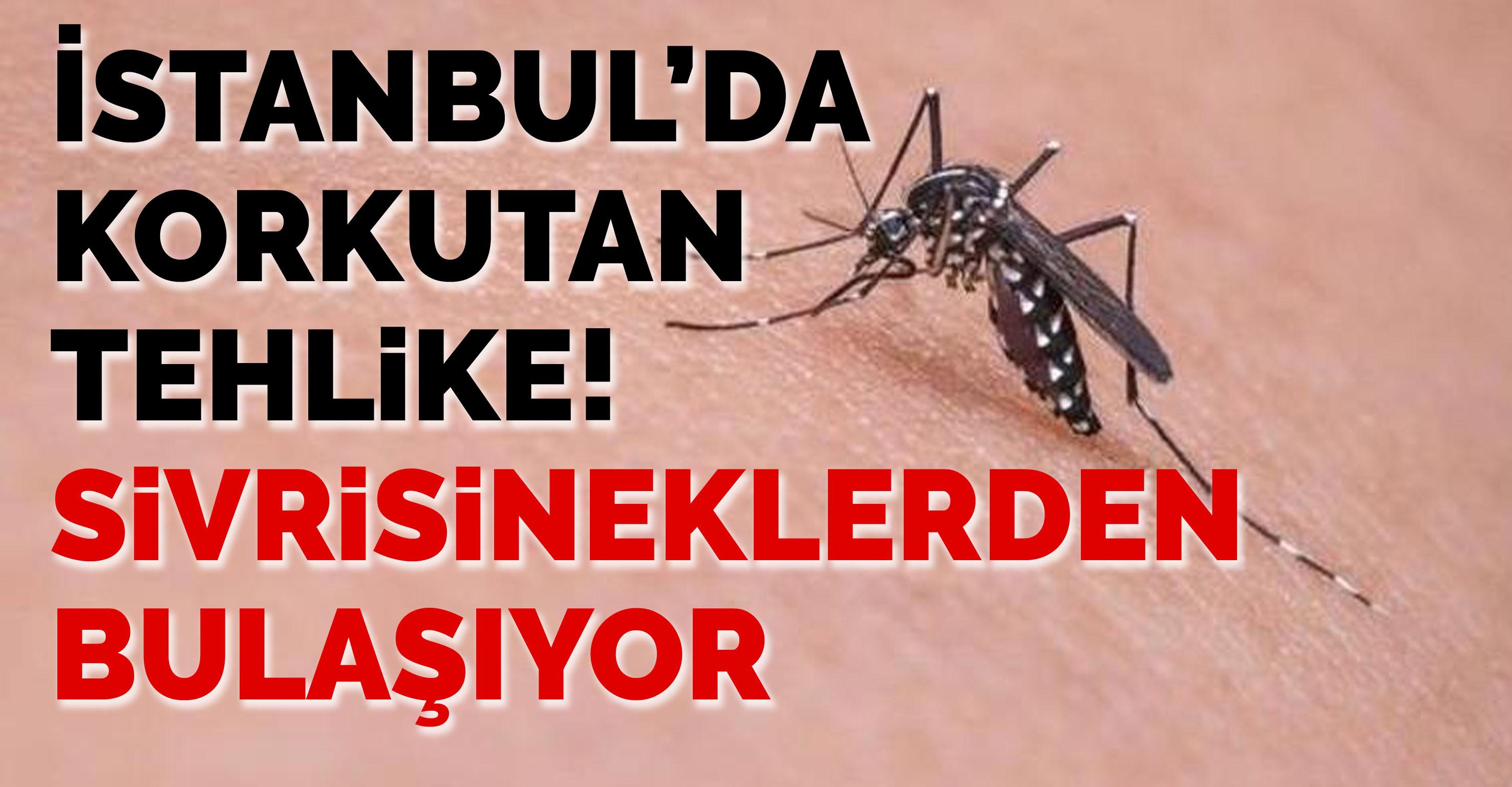İstanbul'da korkutan tehlike! Sivrisineklerden bulaşıyor