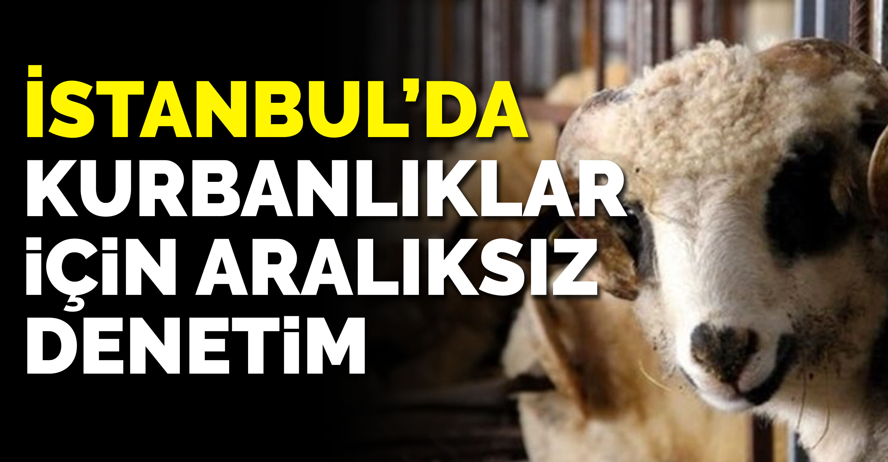 İstanbul'da anadolu'dan getirilen kurbanlıklar için aralıksız denetim