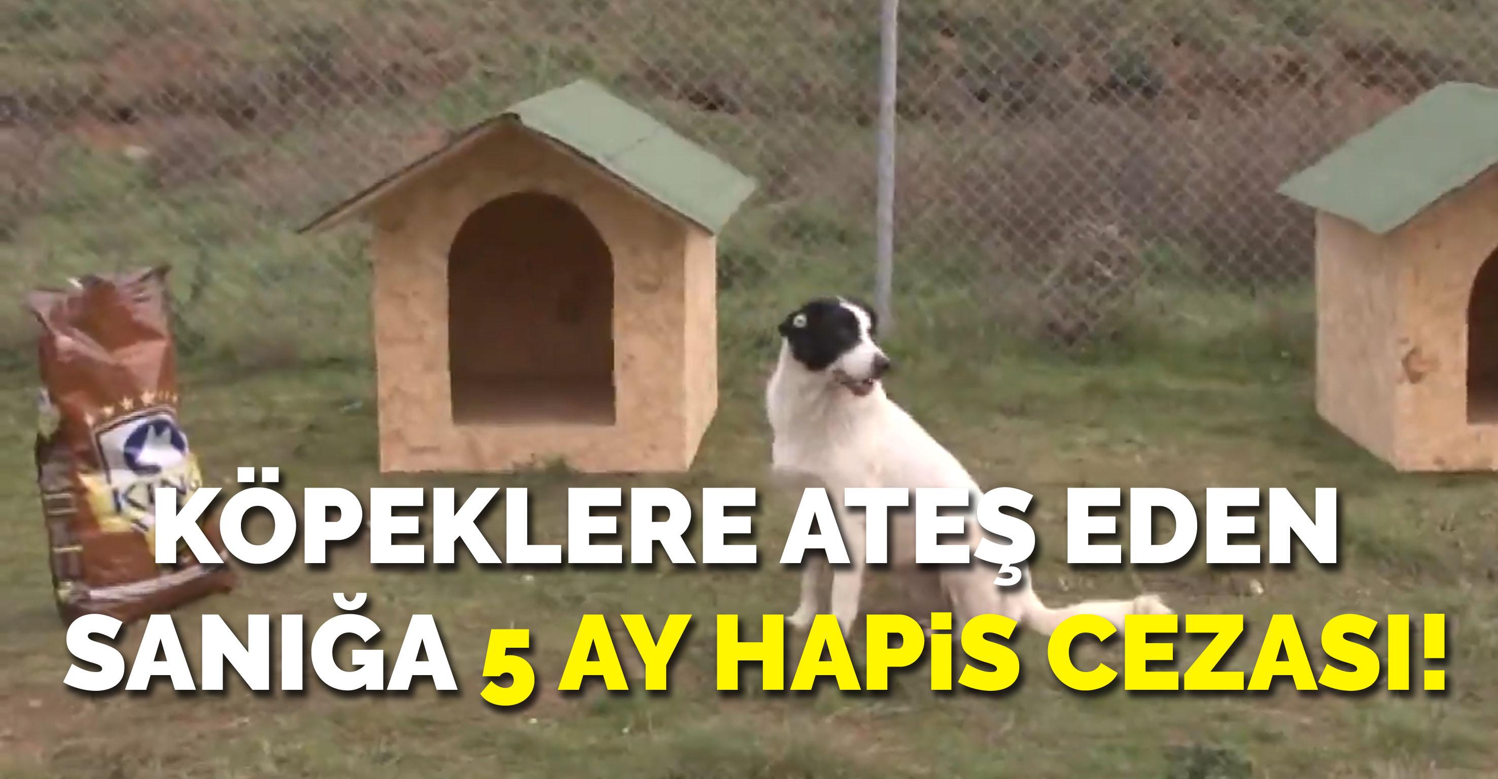 Köpeklere ateş eden sanığa 5 ay hapis cezası!