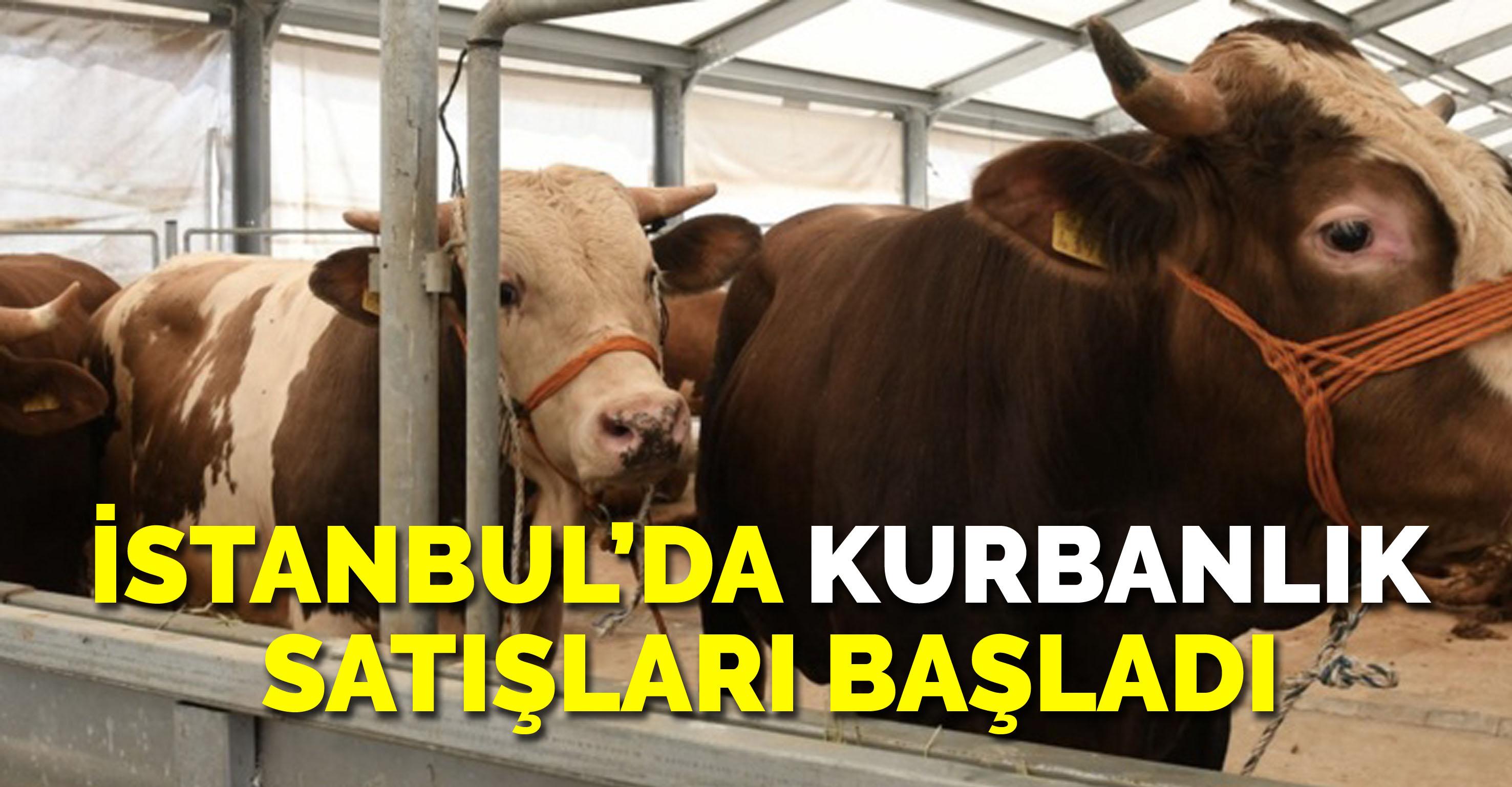 İstanbul'da kurbanlık satışları başladı