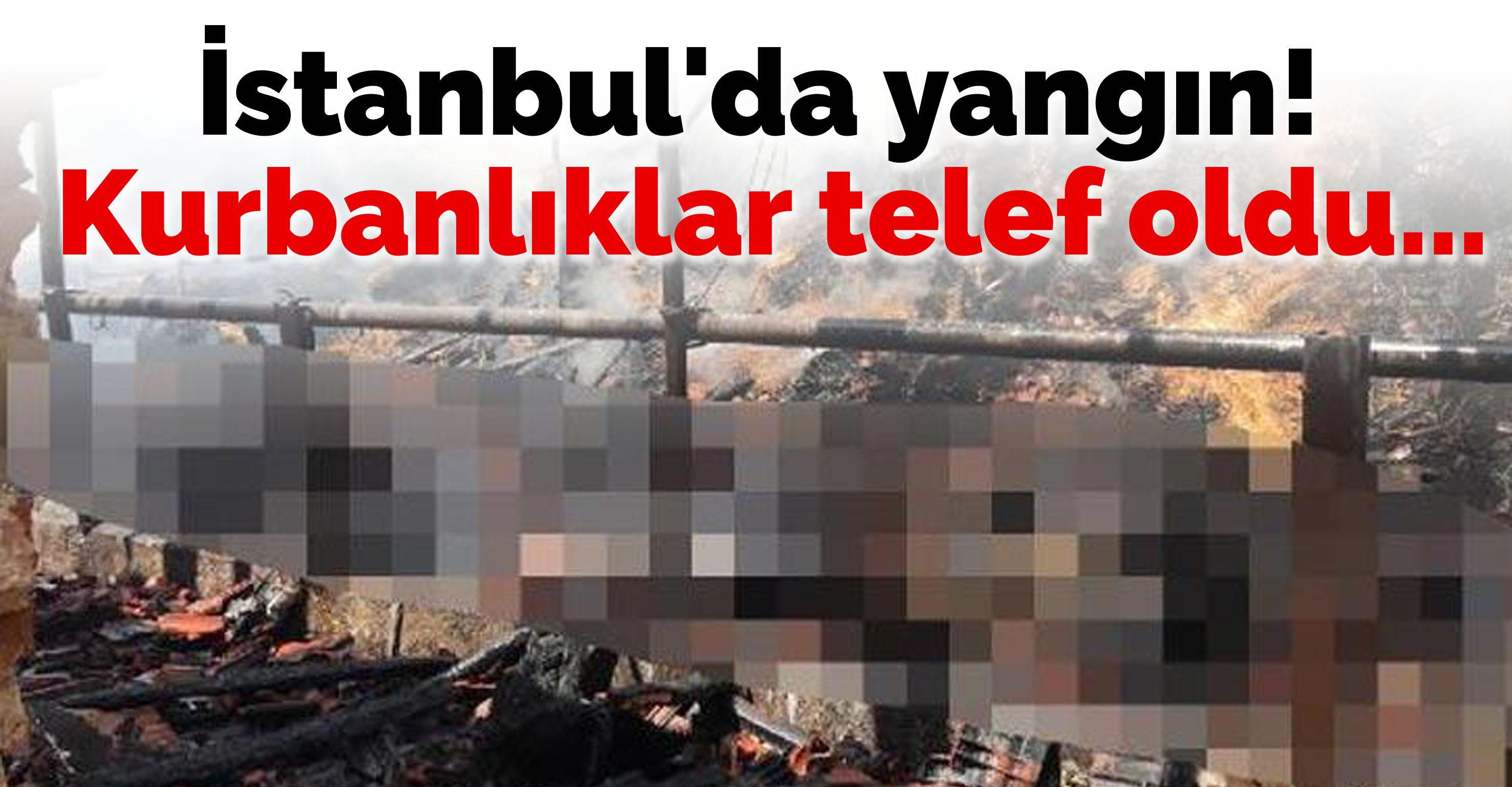 İstanbul'da yangın! Kurbanlıklar telef oldu…