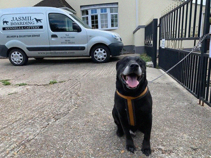 10 Yıllık Sahibi Tarafından Bir Notla Birlikte Barınağın Kapısına Terk Edilen Yaşlı Köpek