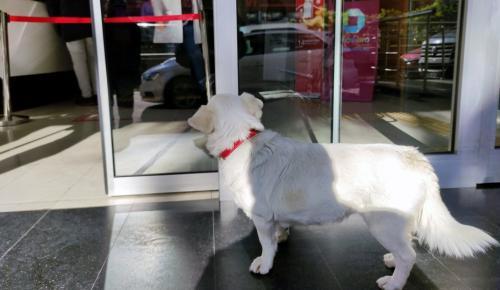 Sahibi tedavi gören köpek, 5 gündür hastane kapısında bekliyor -VİDEO HABER-