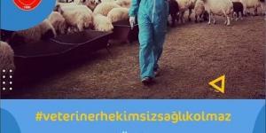 Şanlıurfa Veteriner Hekimleri Odası Başkanı Abdullah Açıkgöz `den Dünya Veteriner Hekimler Günü Mesajı