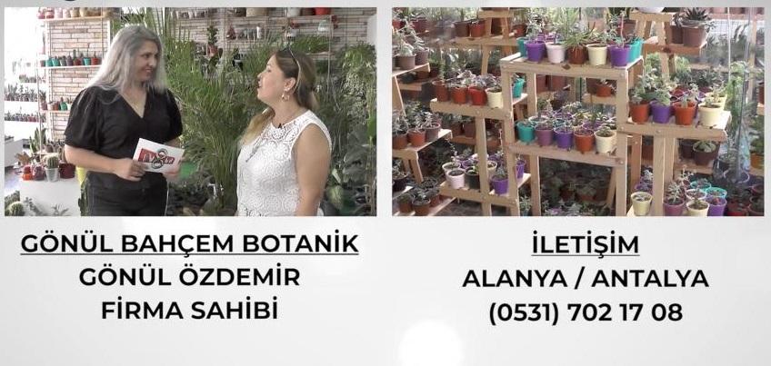 Gönül Bahçem Botanik, müşterilerine çeşit çeşit bitkilerin satış hizmetini sunuyor